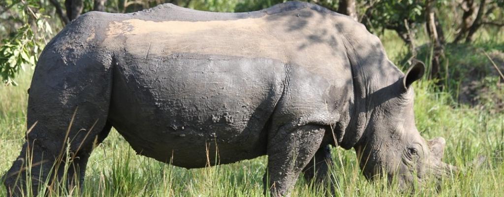Ziwa Rhino Sanctuary, Nakasongola